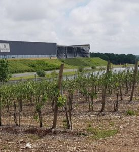 storm damage in the Cognac Region