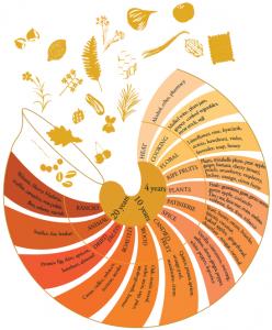 Armagnac aromas